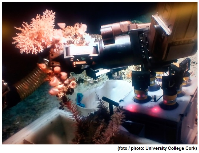 Submarine canyon reveals the role of corals in capturing carbon from the atmosphere